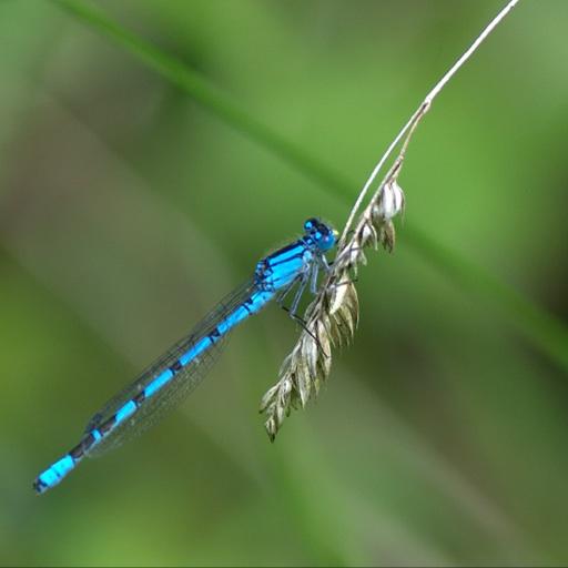 Avatar - Jo Waterland