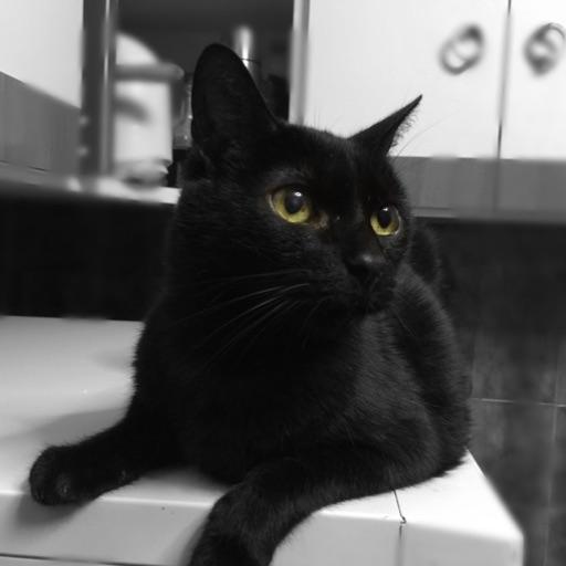 Avatar - El Gato Curioso