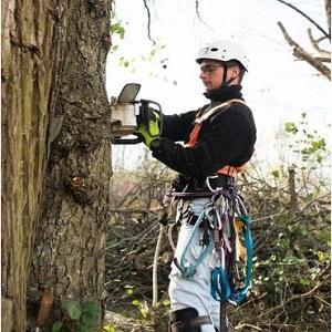 Avatar - Tree Service Stamford