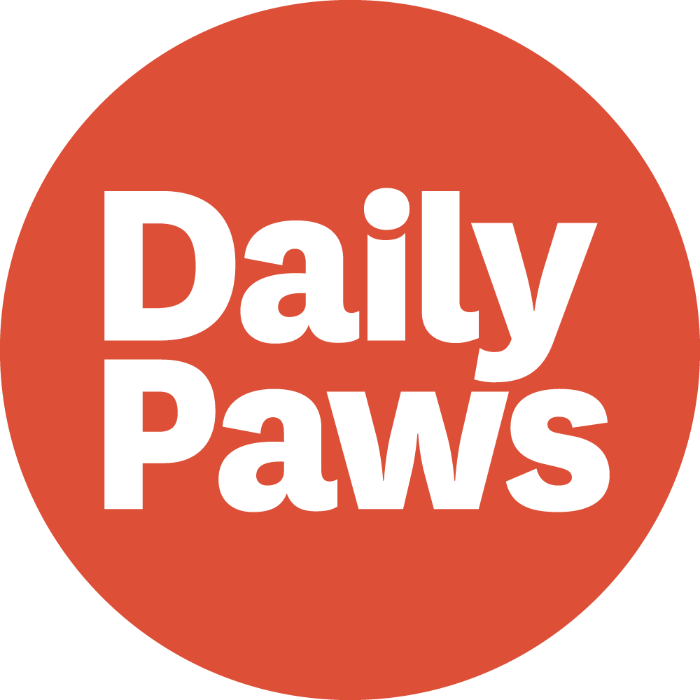 Avatar - Daily Paws