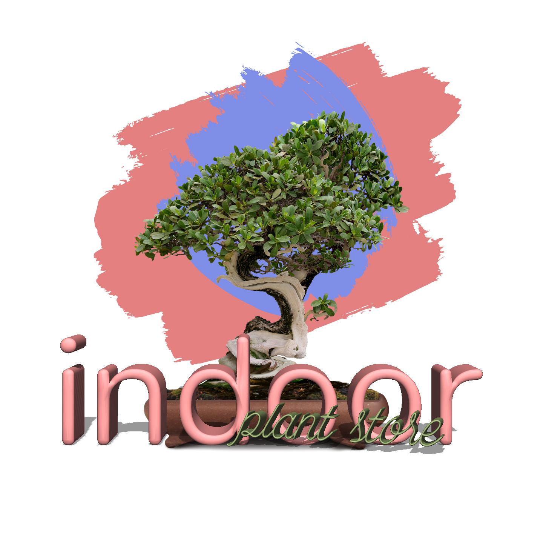 Avatar - Indoor Plants