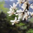 Avatar - novozhou