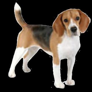 Avatar - Beaglesong