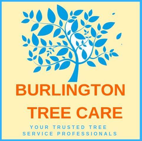 Avatar -   Burlington Tree Care