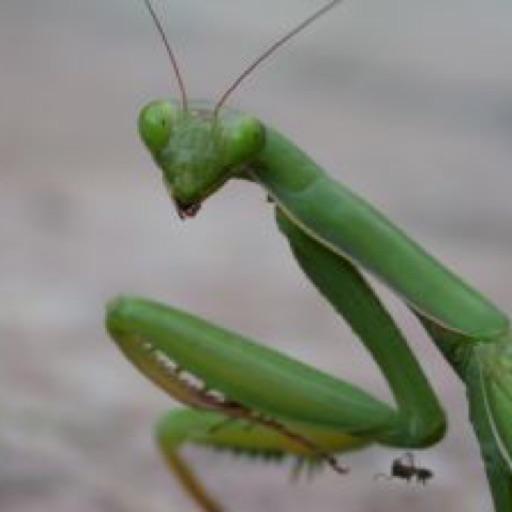 Avatar - Praying Mantis, Namaste