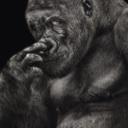 Avatar - Gorilla