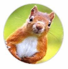 Avatar - Squirrel Rito