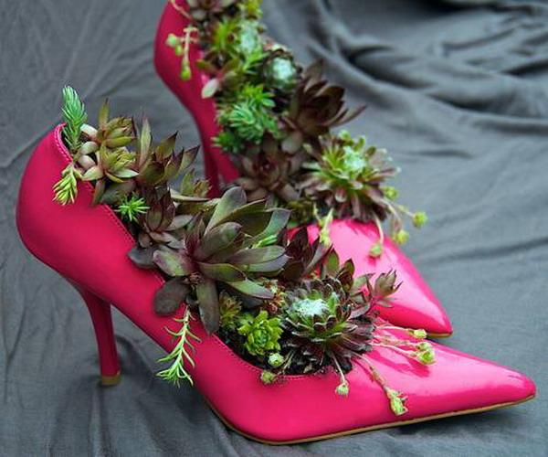 Succulents - Magazine cover