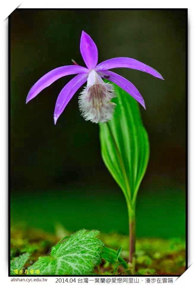 紫的觸動~ - Magazine cover