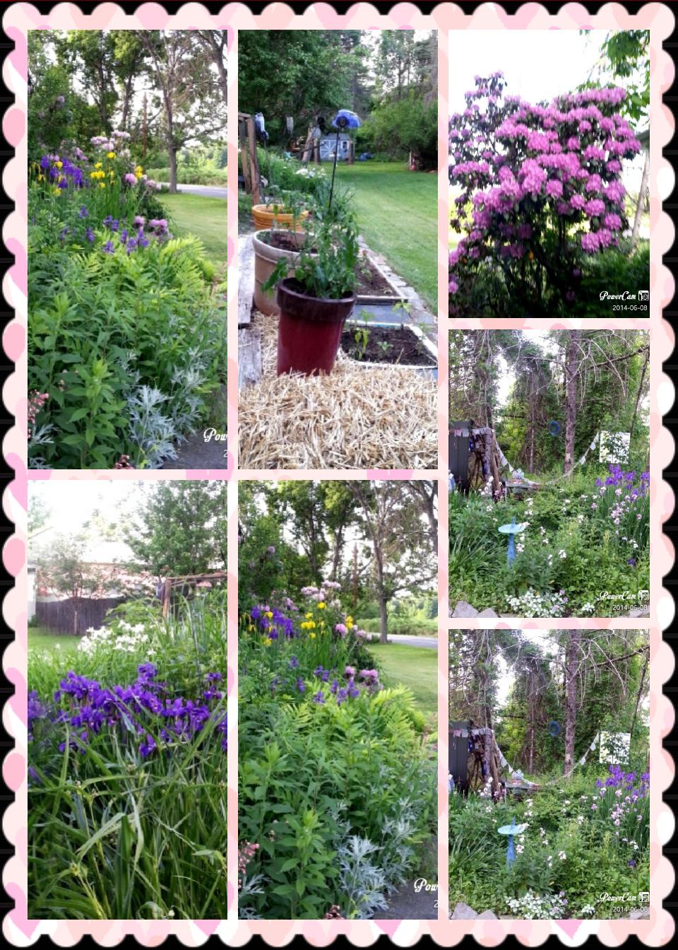 My Gardens - Magazine cover