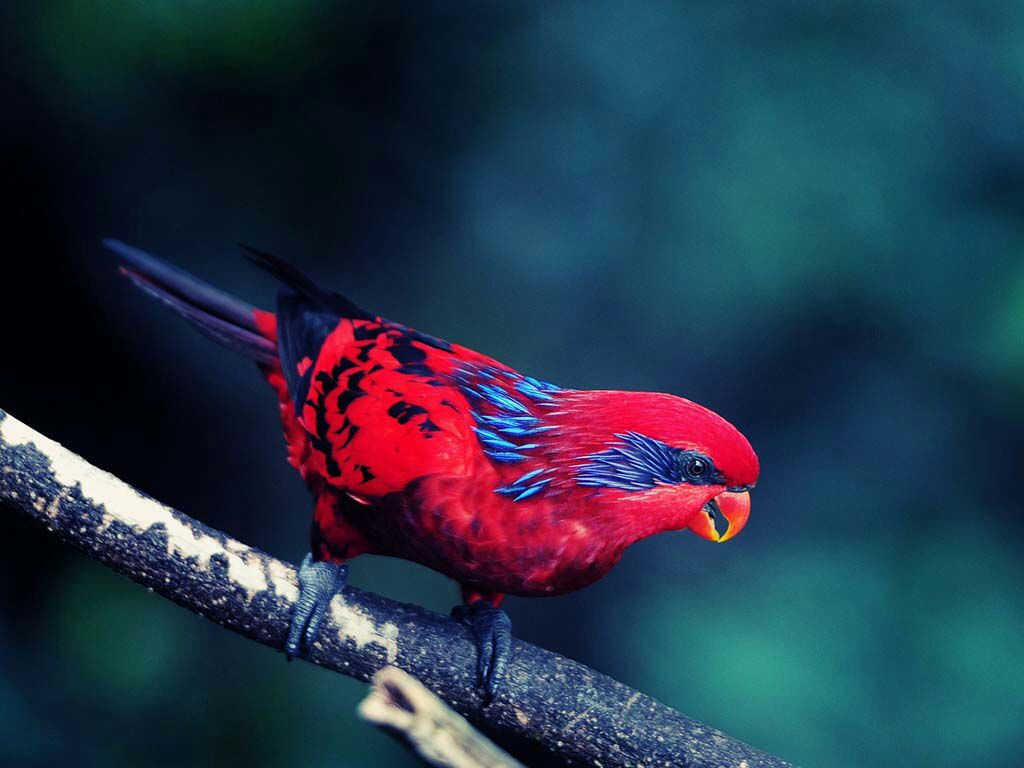 Birds I Love - Magazine cover