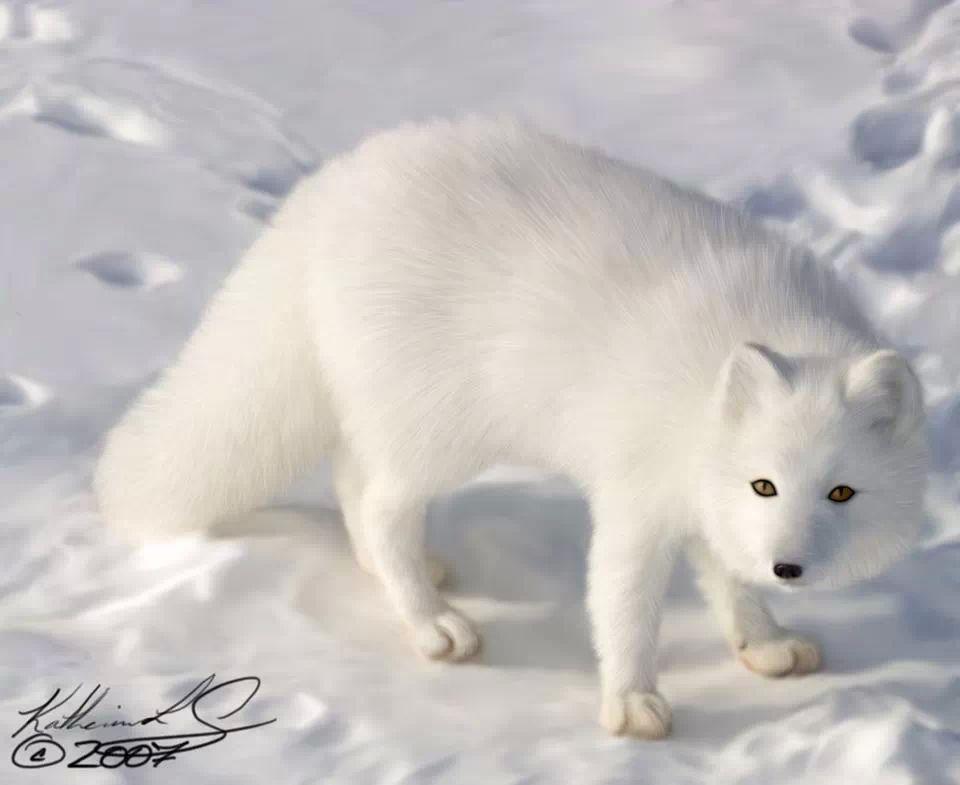 Beautiful Animals & Nature - Magazine cover