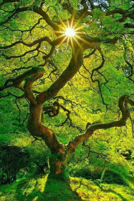 Bio Garden/ Los  Arboles más Espectaculares - cover