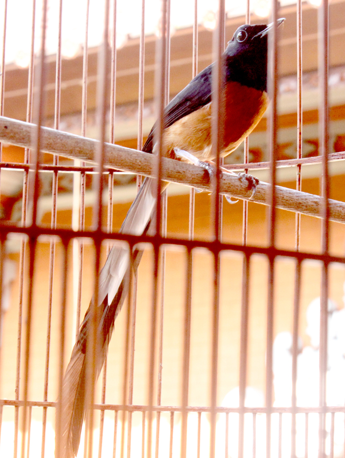 Sari Oka Bird Farm - Magazine cover