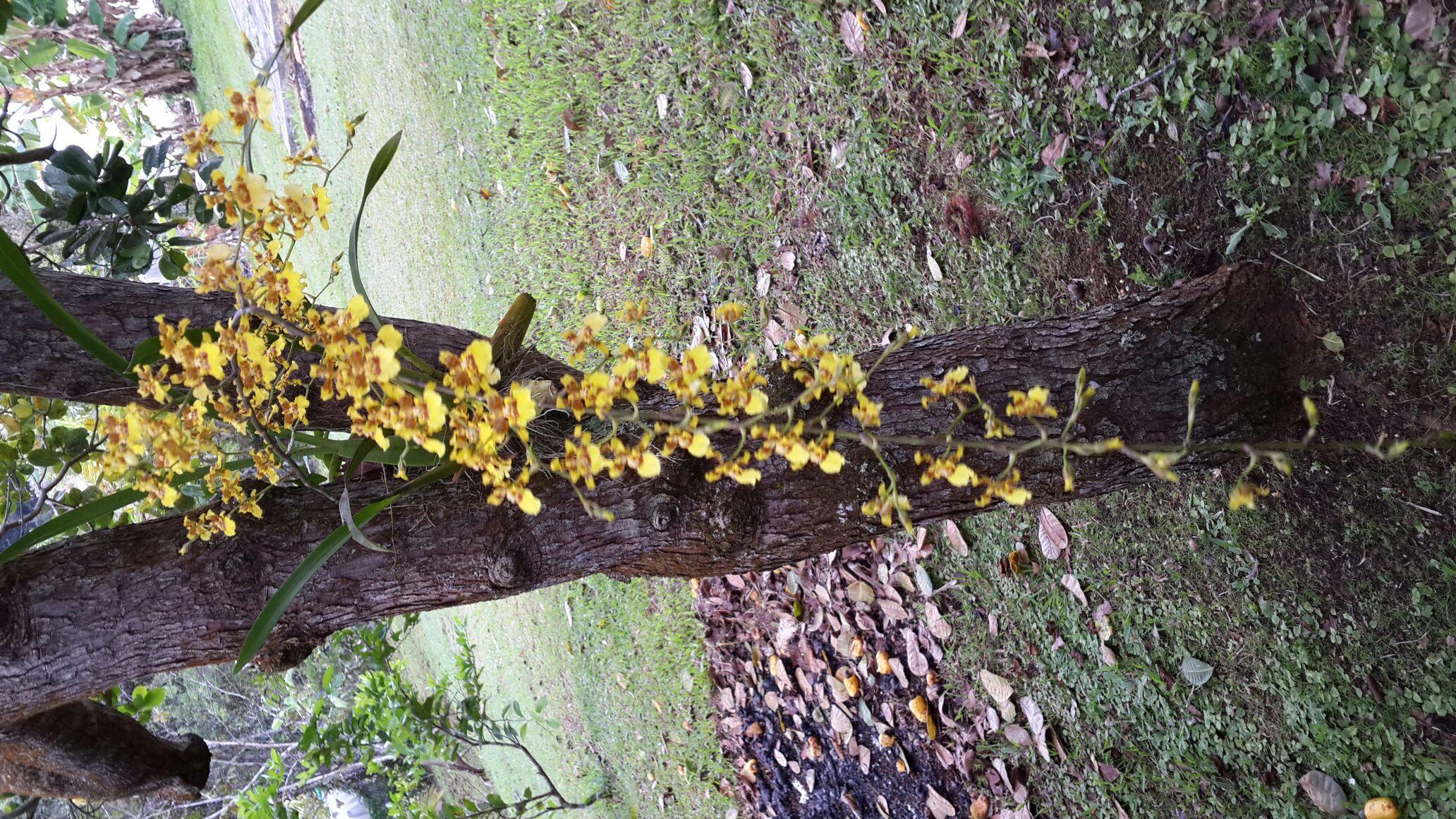 Ma Bella Orchidee.magnifique. - Magazine cover