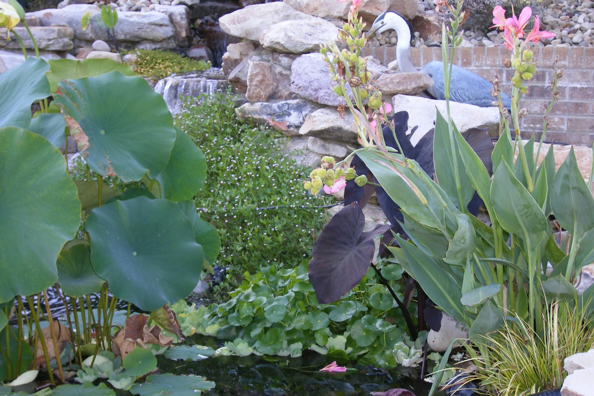Pond Plants - cover