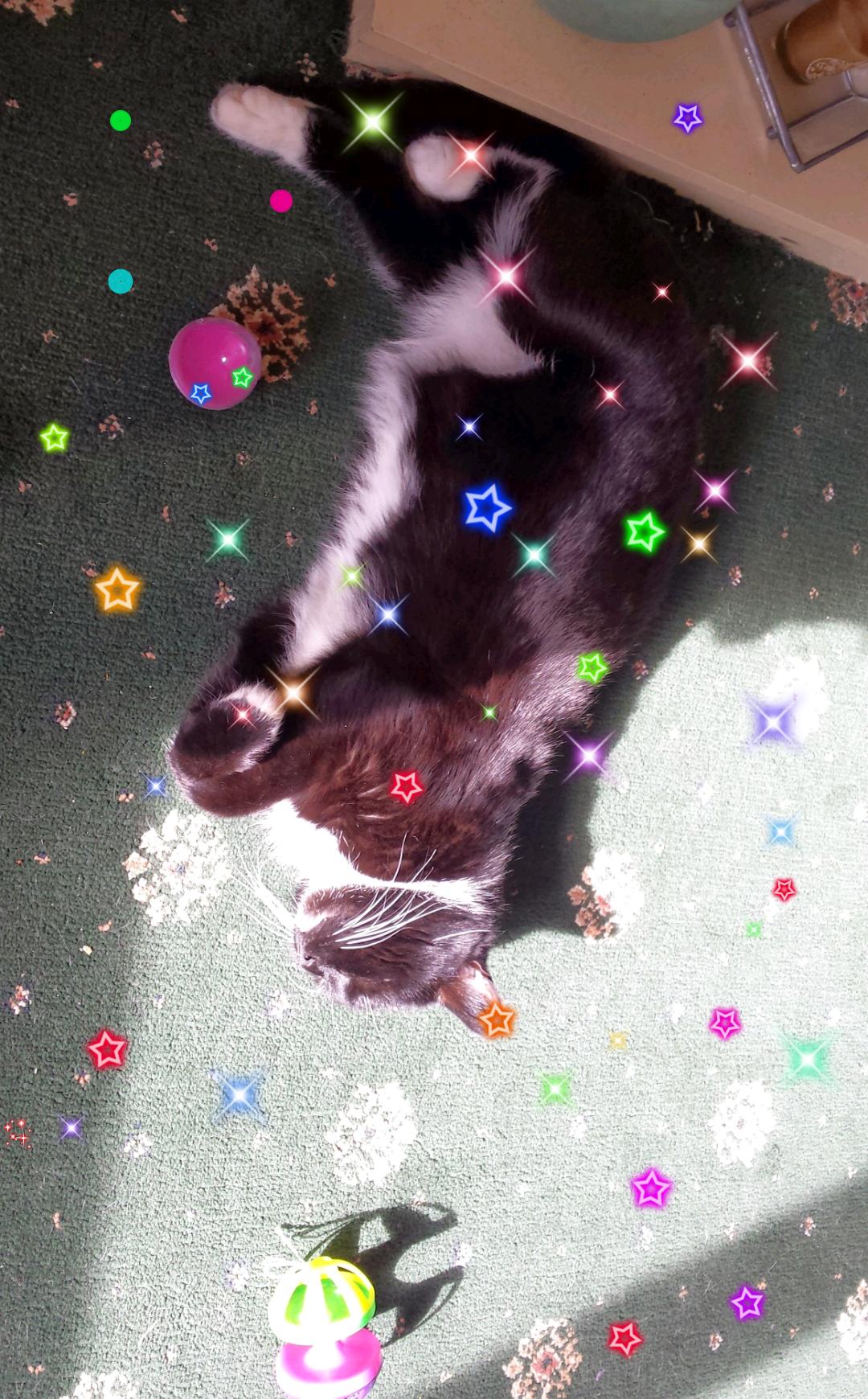 A Very Spoilt Cat. - Magazine cover