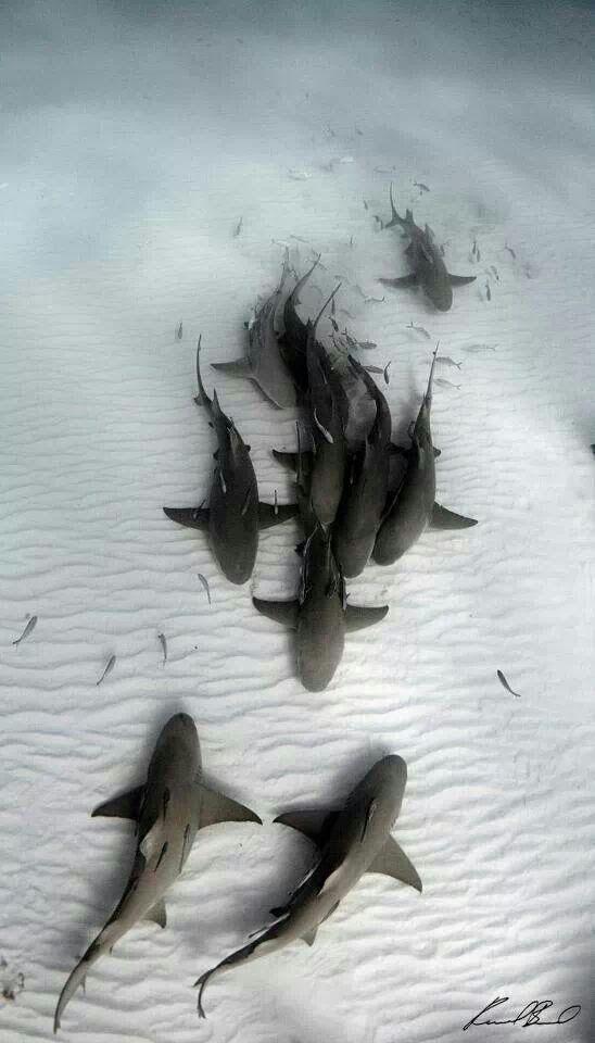 Sea Creatures - Magazine cover