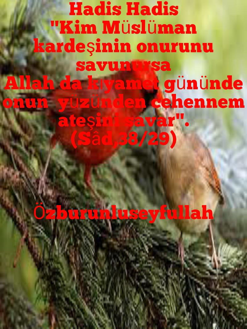 ÖZBURUNLU SEYFULLAH - Magazine cover