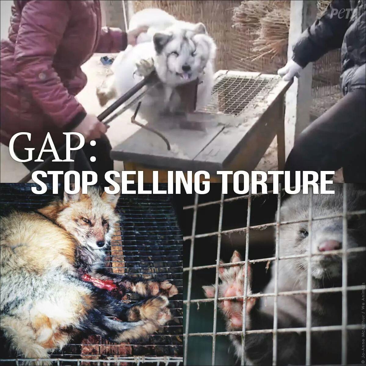 Animal Cruelty Awareness - Magazine cover
