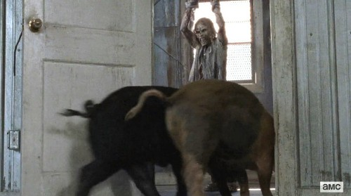 Why No One Will Die From Eating Zombie-Fed Pigs On 'The Walking Dead'