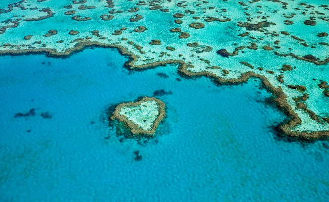 Huge Parts Of The Great Barrier Reef Are Officially Dead Due To Climate Change