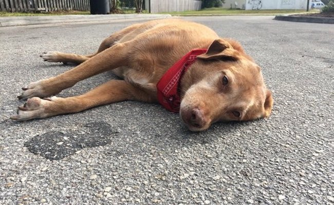 A Dog In Florida Waited In The Street For Hours In The Spot Where Their Owner Died