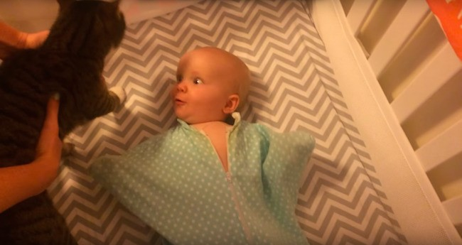 This Newborn Baby Loves Cats More Than You Do