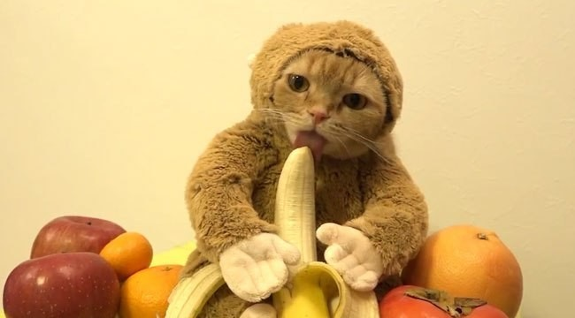 This Week In Cute: Banana Cats And Goats In Coats!