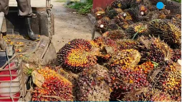 Nutella is not the only product with disputed palm oil