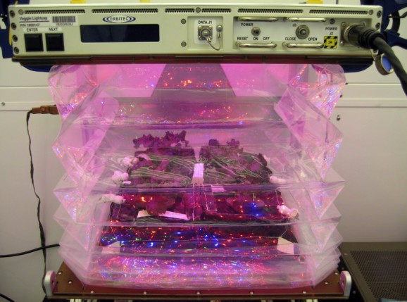 NASA's putting plants inside special 'pillows' to grow veggies in space
