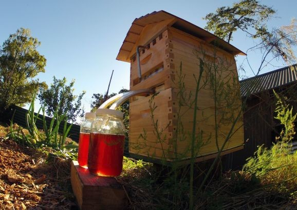 Indiegogo's new crowdfunding record: $5.3M and counting for a smart beekeeping system