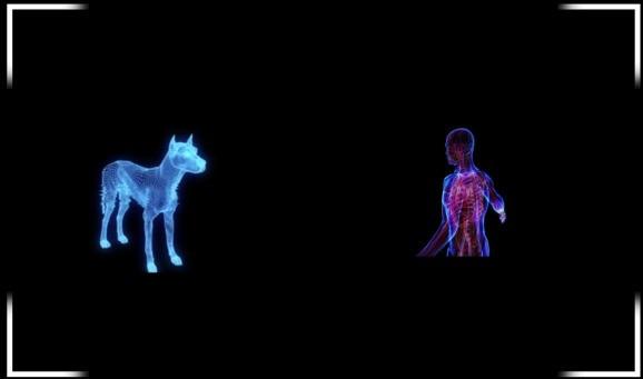 Verisim Life uses AI-powered biosimulations to replace animal drug testing