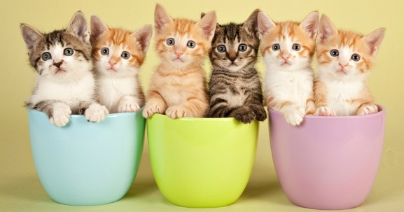 Foursquare says your check-ins will now save kittens