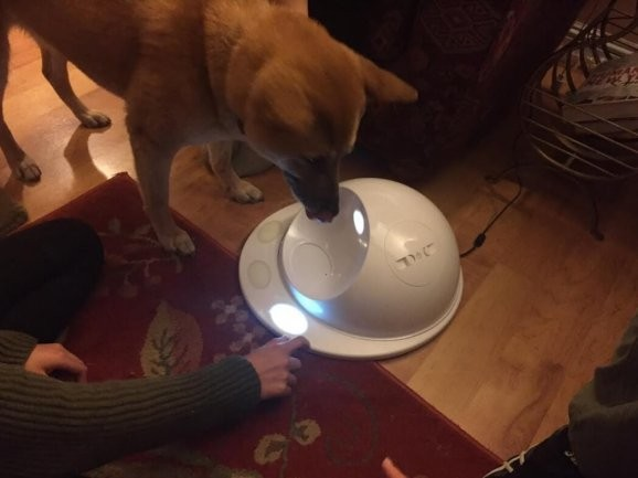 CleverPet tries to teach my dog to play a video game