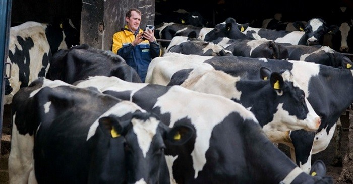 Cow computing? Scottish company creates wearable sensors for cows