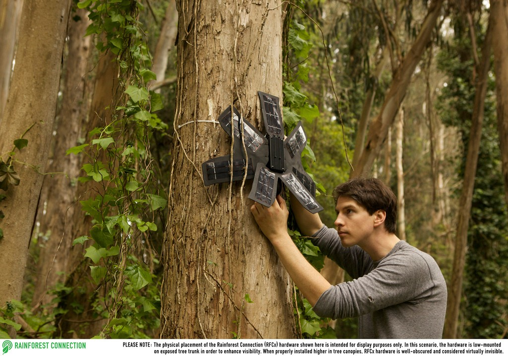 Your old smartphone could pinpoint illegal logging & save the rainforests