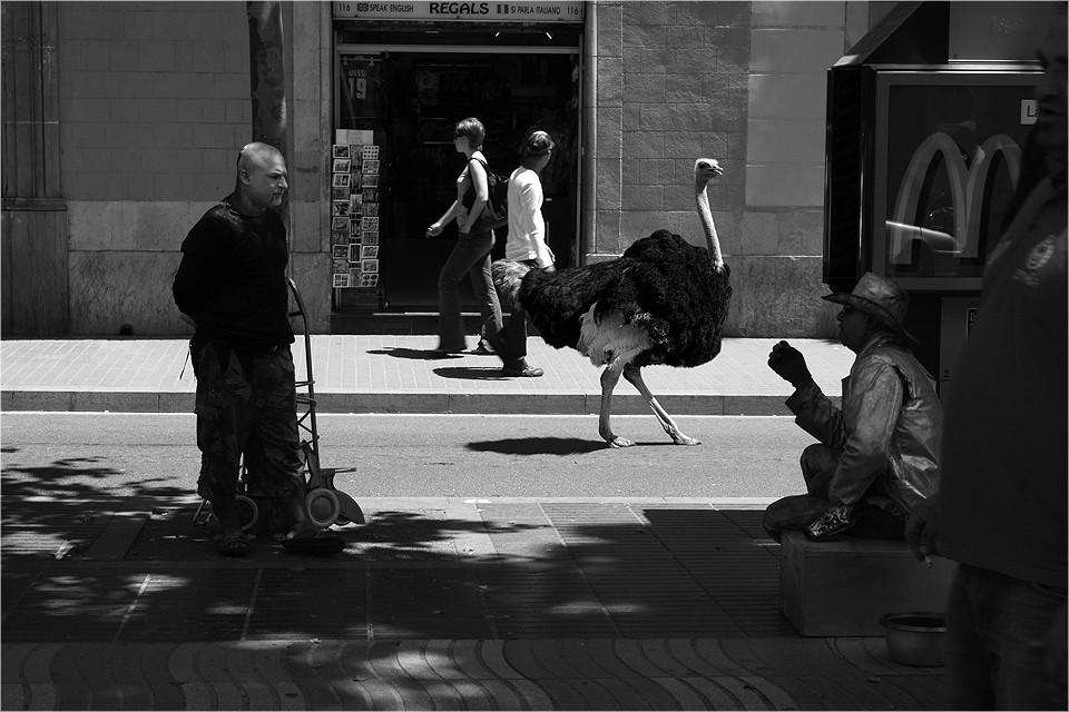 Wild Animals Strut Through Gritty Street Photographs