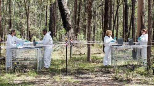 Dead Bodies Move While Decomposing, Australian Researchers Find