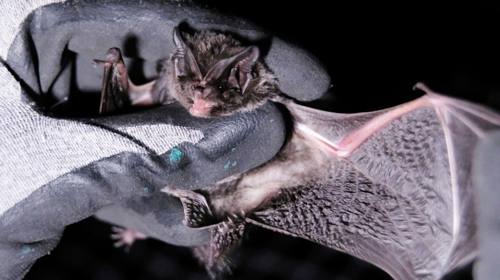 Scientists Now Think They Know What Started China's Deadly Coronavirus: Bats