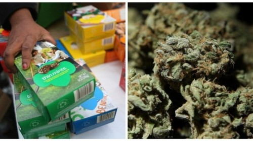 Let Girl Scouts Sell Cookies Outside Weed Stores, You Squares