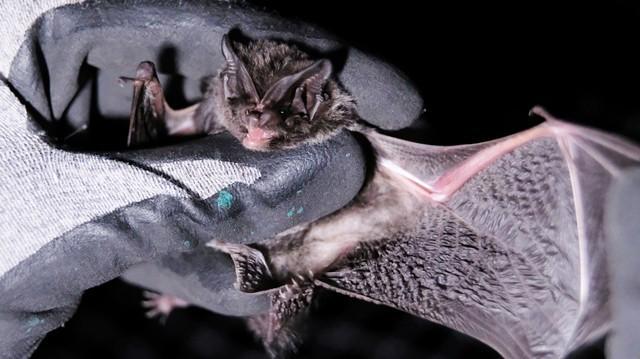 Bats - cover