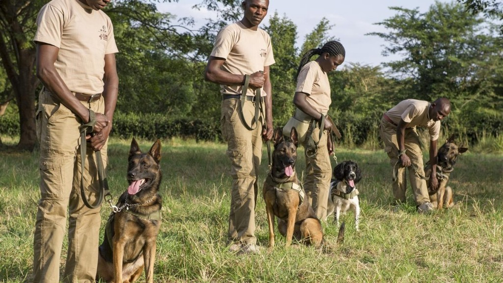 Ivory-Sniffing Dogs Are Running Down Poachers Across Africa