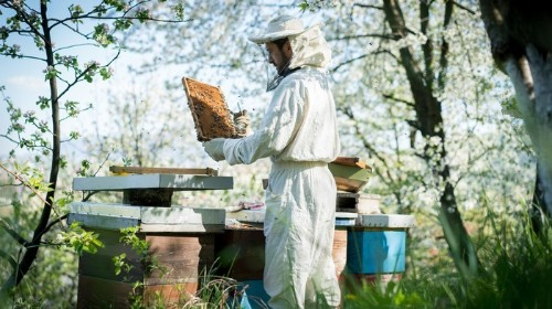 Dad Blames 'Hipster' Honeybee Keepers for Kid Getting Stung by Wasps in NYC Park