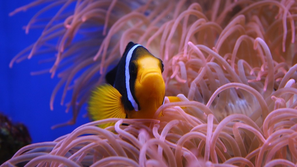 Global Warming Is Wiping Out Marine Animals Faster Than Land Dwellers
