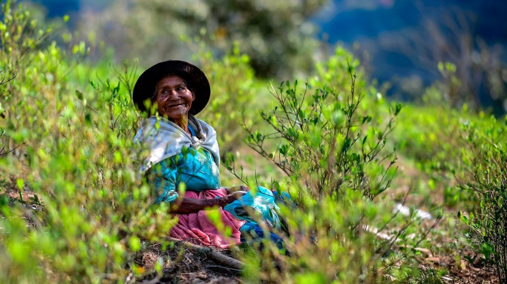 Bolivia's Coca Farmers Are Riding High as Legal Scheme Safe