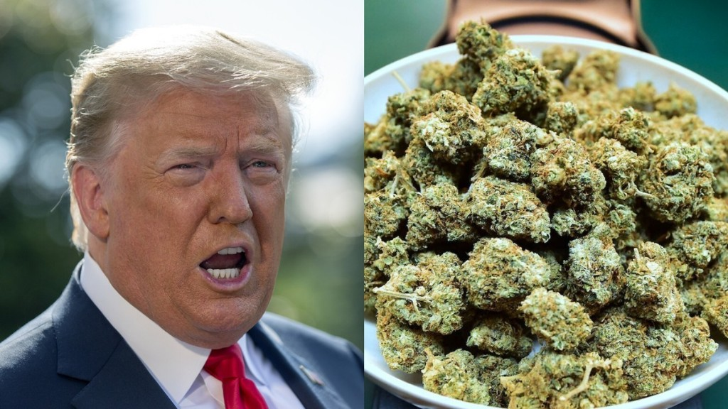 Trump's Justice Department Is Making Life Hell for Legal Weed