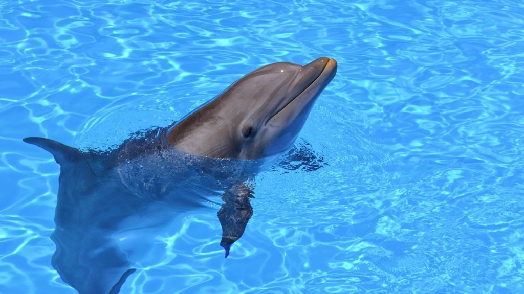 Animatronic Robot Dolphins Could Save Real Ones From Aquariums and Marine Parks