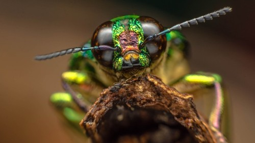 Scientists Fear DARPA's 'Insect Allies' Will Attack Global Food Supply with Viruses