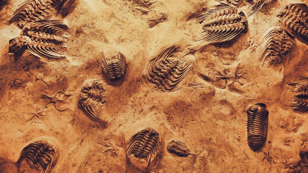 What Caused the First Mass Extinction 445 Million Years Ago? Global Warming, Suggest Scientists